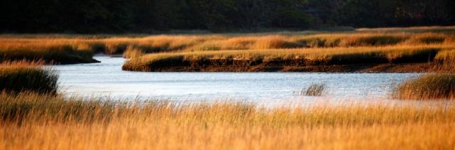Wellfleet Audubon