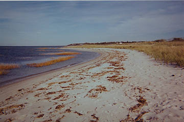 beachwingisland_5x3